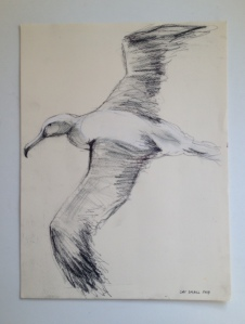 albatrosssketchbest